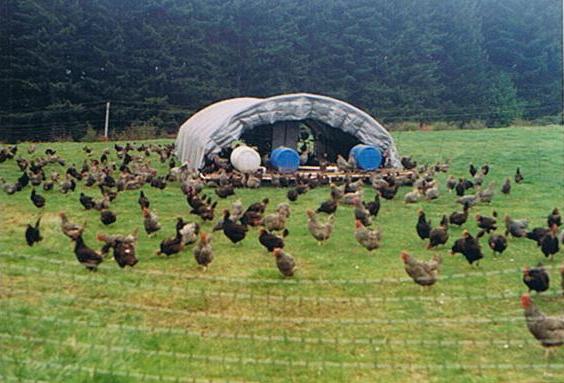 Poultry — NDSU