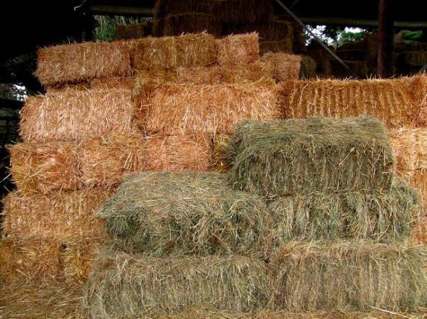 grass hay & straw