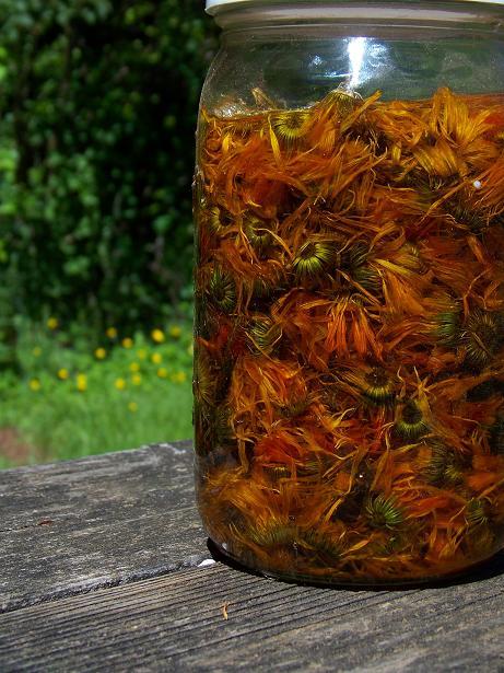 Resina calendula infused EVOO