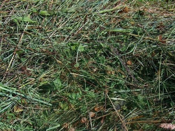 Jane's hay
