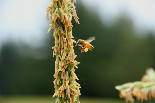 Lovely bee
