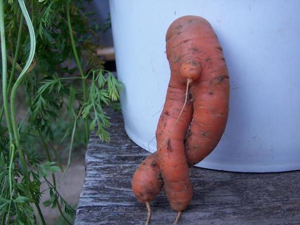 male carrot