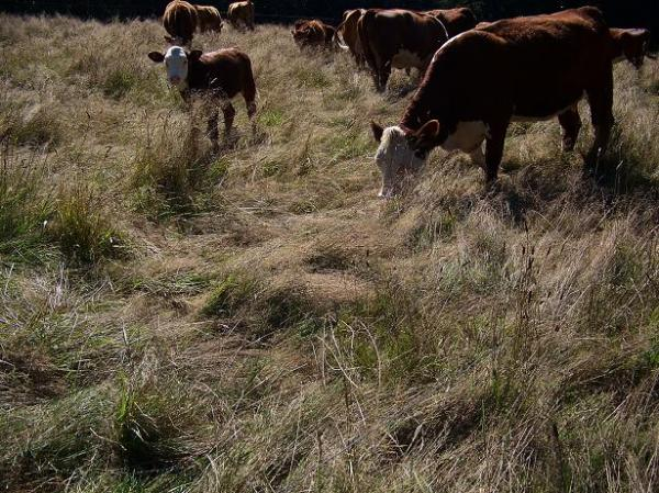 Stockpiled forage