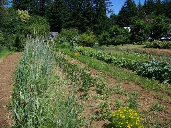 early July - main garden
