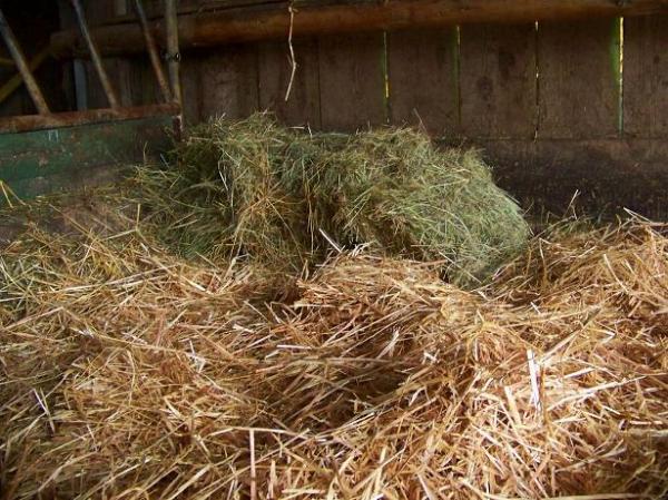 Jane's nighttime hay