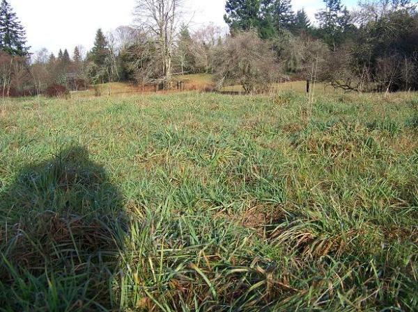 grazed ground 2013