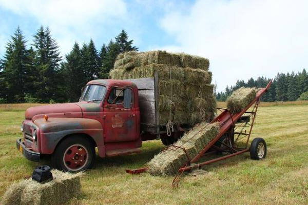 two woman hay hauling