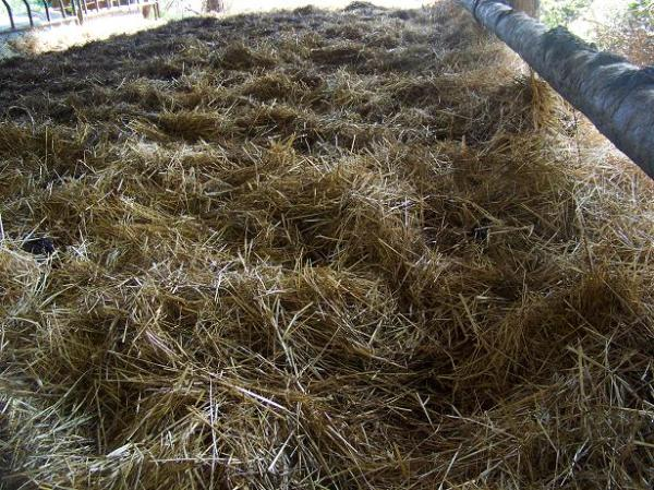 winter feeding shed/deep bedding