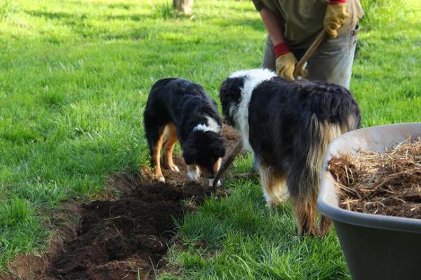 raspberry planting crew
