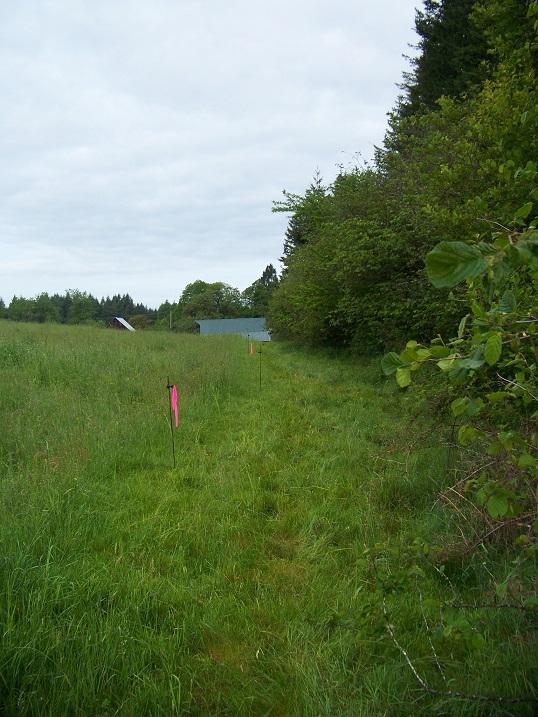 hayfield hedgerow