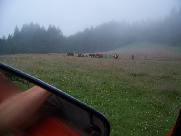 Foggy morning chores