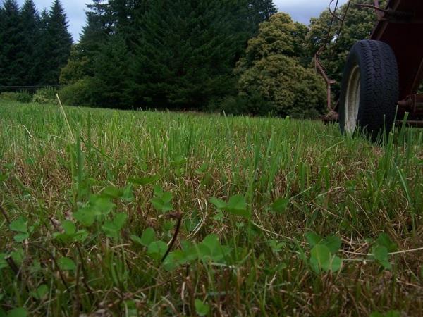 July 20, 2014.  Regrowth on hay field cut July 14, 2014