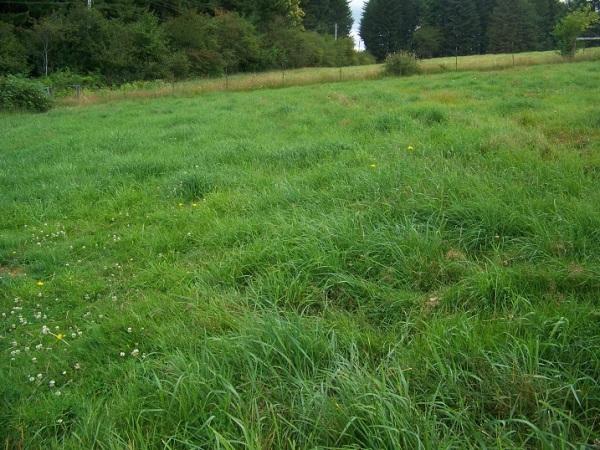 July 20, 2014.  Broiler field, broilers harvested June 28, 2014