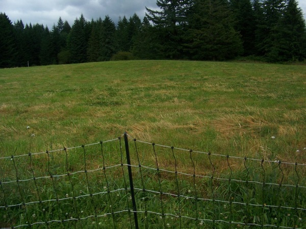 July 20, 2014.  Regrowth hay field cut July 7th, 2014