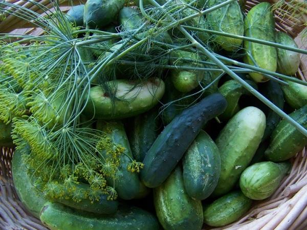 National Pickling & Marketmore 76