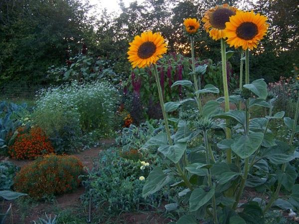Garden path at the keyline