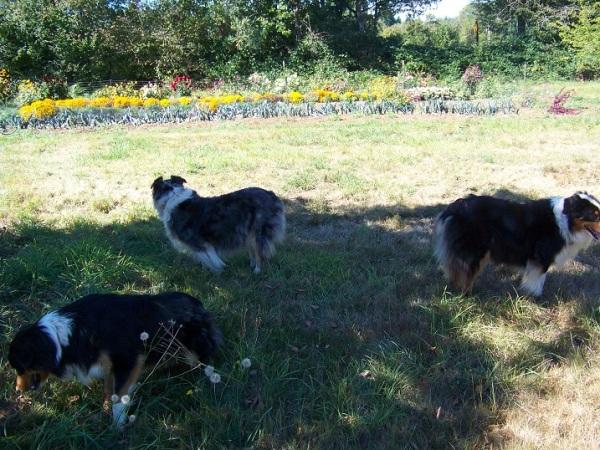 Dog days of September