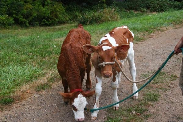 Heading to pasture