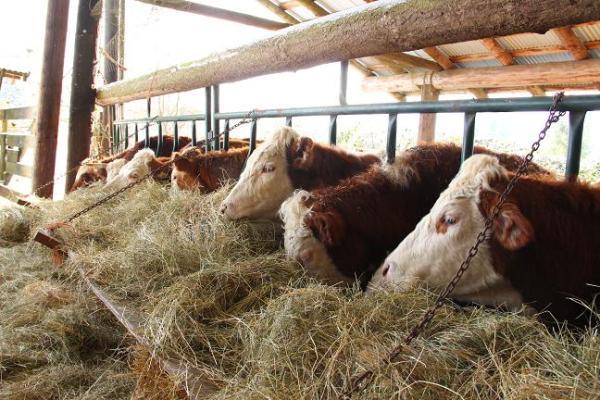 feeding shed