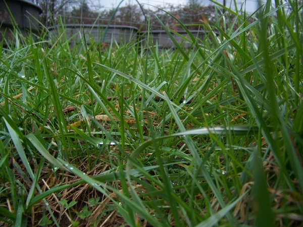 Grass adjacent to the sacrifice area/feeding shed
