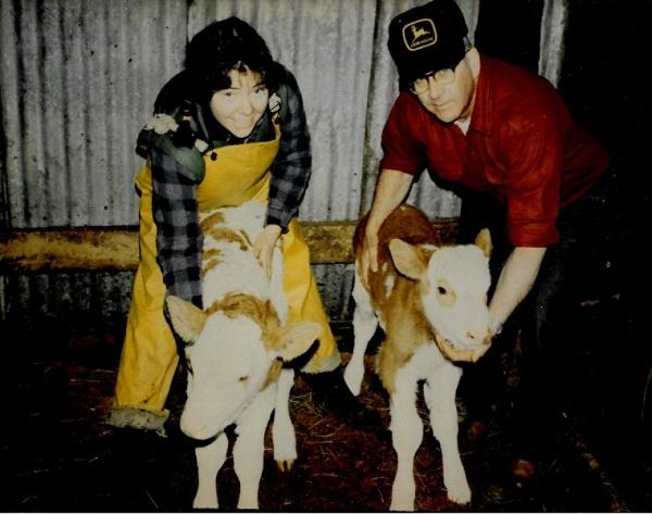 1982 - Guernsey Simmental twin bulls