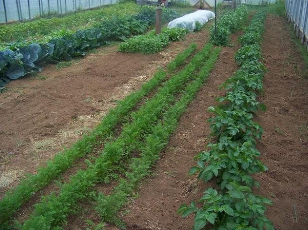 greenhouse 1