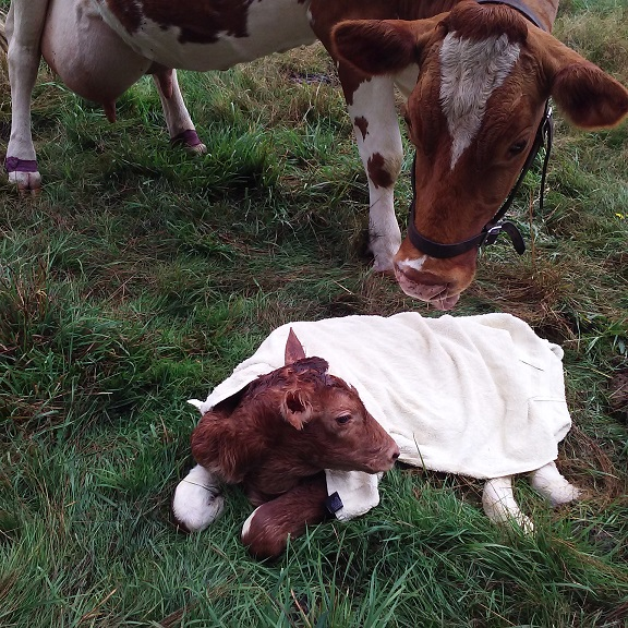 Five minutes old
