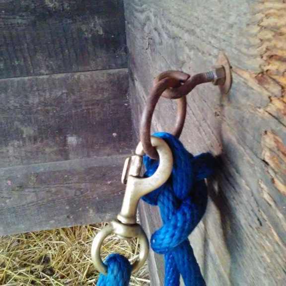 Eyebolt with ring for tying the calf during milking